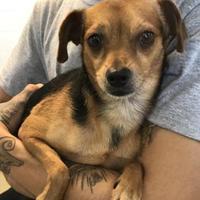 Adopt A Pet :: Bernie - Miami, FL