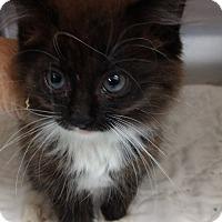 Adopt A Pet :: Teddy - Armuchee, GA