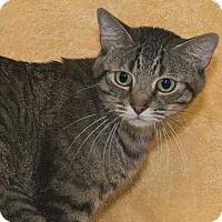 Adopt A Pet :: Rory - Elmwood Park, NJ