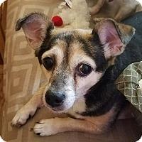 Adopt A Pet :: Chloe - Louisville, KY - Dayton, OH