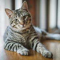 Adopt A Pet :: Boyfriend - St. Louis, MO