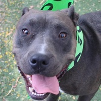 Adopt A Pet :: *INARA - Las Vegas, NV