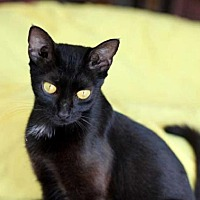 Adopt A Pet :: NEFERTITI - Sussex, NJ