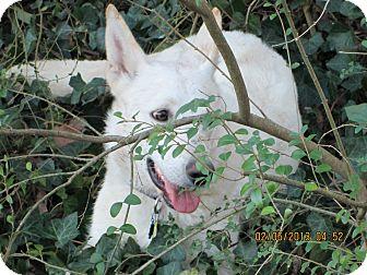 German Shepherd Dog Dog for adoption in Greeneville, Tennessee - Fiona