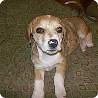 Adopt A Pet :: Topaz - Shirley, NY