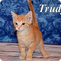 Adopt A Pet :: Trudy - Troy, OH