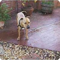 Adopt A Pet :: Tiny - Bakersfield, CA