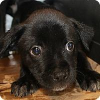 Adopt A Pet :: Lilo - East Rockaway, NY