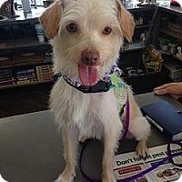 Adopt A Pet :: Murphy - Mission Viejo, CA