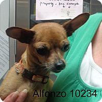 Adopt A Pet :: Alfonzo - Greencastle, NC