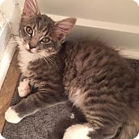 Adopt A Pet :: Maui - McDonough, GA