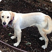 Adopt A Pet :: Sammy - Destrehan, LA