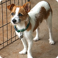 Adopt A Pet :: Marbles - Norwalk, CT