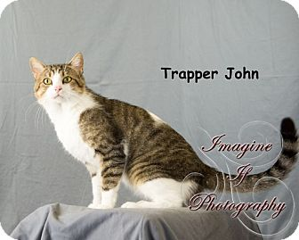 Domestic Shorthair Cat for adoption in Oklahoma City, Oklahoma - Trapper