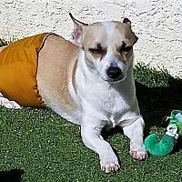 Adopt A Pet :: Rocky - San Juan Capistrano, CA