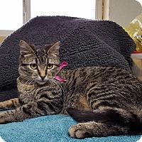 Adopt A Pet :: Einstein - Lexington, MO