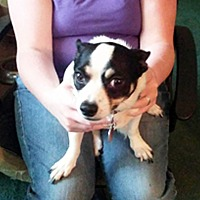 Adopt A Pet :: Sugar Pack - Marion, NC