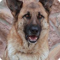 Adopt A Pet :: Irina von Ingulstad - Los Angeles, CA