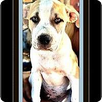 Adopt A Pet :: Baker - Rancho Cucamonga, CA