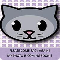 Adopt A Pet :: Geneva - Columbia, SC