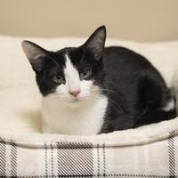 Adopt A Pet :: Tater Tot - Elk Grove Village, IL