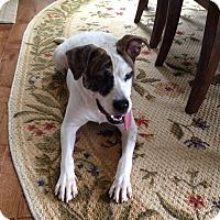 Adopt A Pet :: Genevieve - Alpharetta, GA