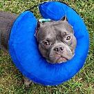 Adopt A Pet :: Hippo