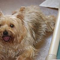 Adopt A Pet :: Jock - Jewett City, CT