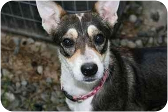 Terrier (Unknown Type, Small) Mix Dog for adoption in Saint Charles, Missouri - Lady Sarah