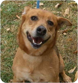 Shepherd (Unknown Type) Mix Dog for adoption in kennebunkport, Maine - Fiona headed north