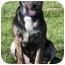 Photo 2 - German Shepherd Dog/Hound (Unknown Type) Mix Puppy for adoption in Sacramento, California - Klyde best pup