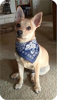Chihuahua Dog for adoption in Austin, Texas - Princess in Dallas