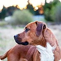Adopt A Pet :: BARLEY - Kingston, WA