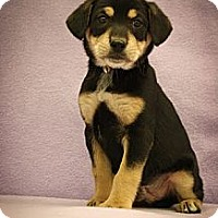 Adopt A Pet :: Lester - Broomfield, CO