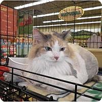 Adopt A Pet :: Drama - Warren, MI