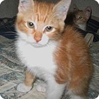 Adopt A Pet :: Linda - Shelton, WA