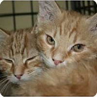 Adopt A Pet :: Larry and Curly - Frederick, MD