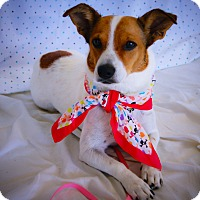 Adopt A Pet :: Mookie - Princeton, KY