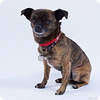 Adopt A Pet :: Nanners - Santa Barbara, CA