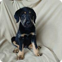 Adopt A Pet :: Alex in CT - Manchester, CT