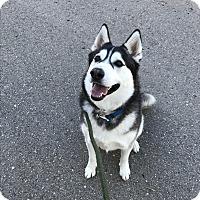 Adopt A Pet :: Gypsy - Meridian, ID