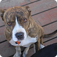Adopt A Pet :: Meghan - Georgetown, CO