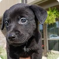 Adopt A Pet :: Skittles - Allen, TX