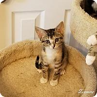 Adopt A Pet :: TAFFY - Houston, TX