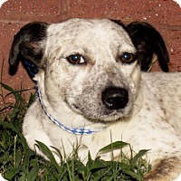 Adopt A Pet :: Cage - Oxford, MS