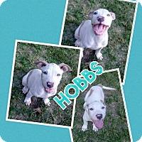 Adopt A Pet :: Hobbs - Blacksburg, SC