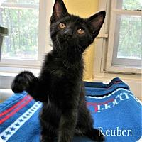 Adopt A Pet :: Reuben - Jackson, NJ