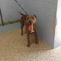 Adopt A Pet :: A506648 - San Bernardino, CA