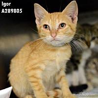 Adopt A Pet :: IGOR - Conroe, TX
