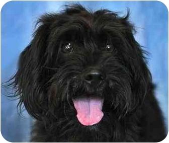 Terrier (Unknown Type, Medium) Mix Dog for adoption in Cannelton, Indiana - Sabastian